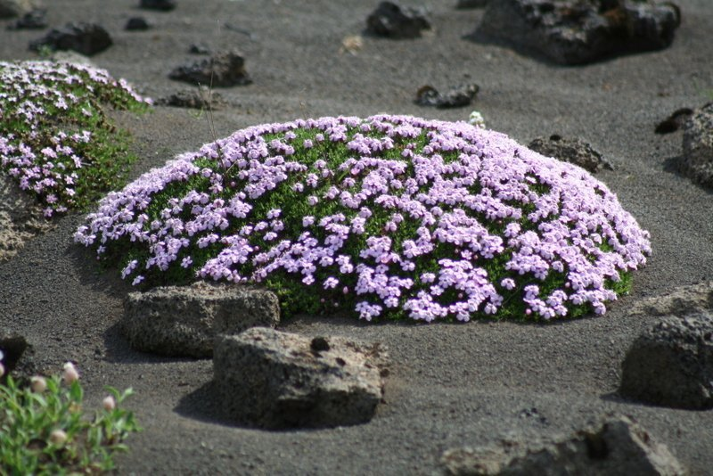 Best-of-North-Iceland - Plants-in-the-interior-1.jpg