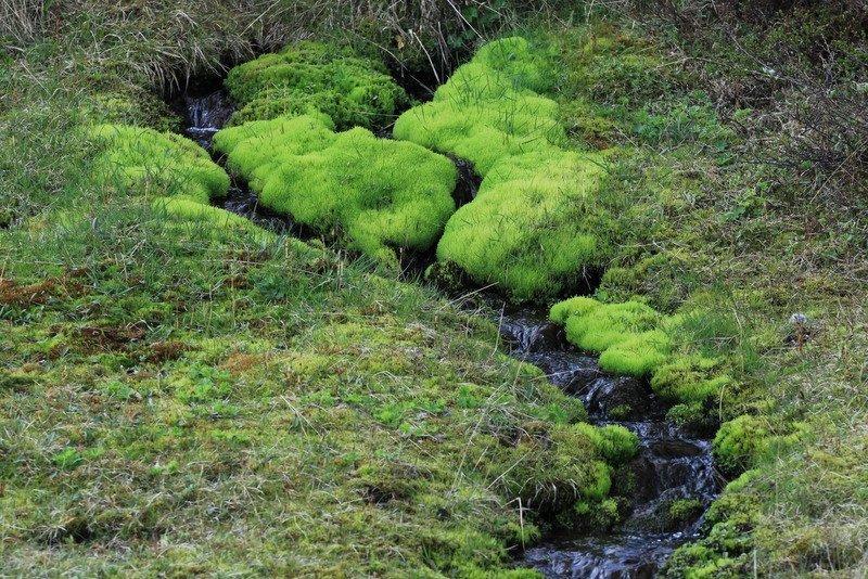 Spectacular-Iceland - Green-Green-Moss.jpg