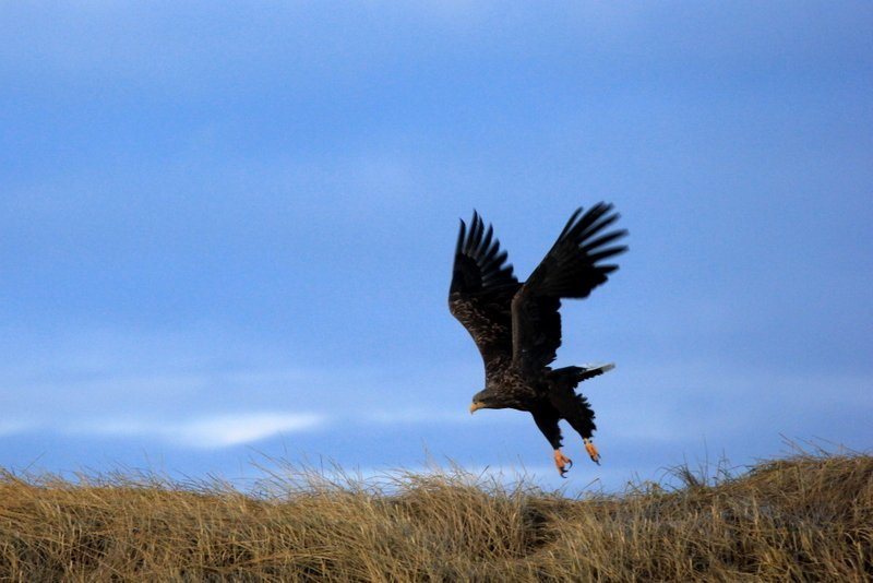 Spectacular-Iceland - Icelaand-Bird-watching-Breidarfjördur.jpg
