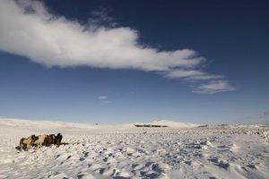 GJ-21-northen-lights-exploration - GJ-21-Icelandic-winter.jpg