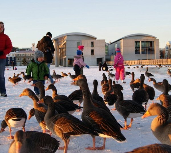 GJ-21-northen-lights-exploration - GJ-21-Reykjavik-and-the-geese.jpg