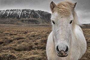 GJ-26-northern-lights-in-style - GJ-26-Iceland-horse.jpg