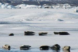 GJ-27-AURORAS-GLACIAL-LAGOON - GJ-27-Glacier-lagoon-with-seals-7.jpg