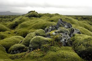 GJ-56-Best-of-south-iceland - GJ-56-Lava-field-in-South-Iceland.jpg