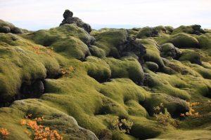 GJ-90-Iceland-country-life - GJ-90-Moss-in-Iceland.jpg