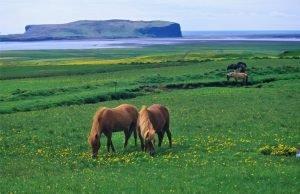 GJ-90-Iceland-country-life - GJ-90-Skagafjördur.jpg