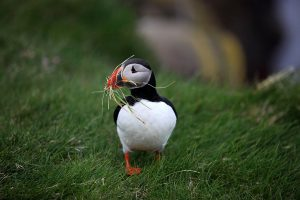 GJ-91-Express-iceland - GJ-A-selfie-picture-with-a-puffin-banner.jpg