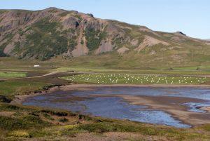 GJ-99-Grand-tour-of-Iceland - GJ-99-Dalir-Region-40.jpg