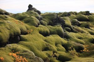 GJ-99-Grand-tour-of-Iceland - GJ-99-Moss-in-Iceland.jpg