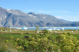 GJ-SGR-1-South-Greenland-Grand-Adventure - GJ-SGR-1-South-Greenland-Sailing-Adventure-49.jpg