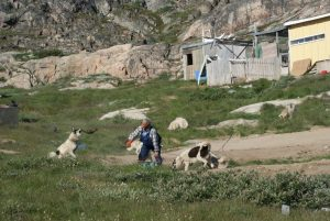 GJ-WGR-4-Amazing-days-Ilulissat-4-days - GJ-WGR-4-Feeding-the-dogs-2.jpg