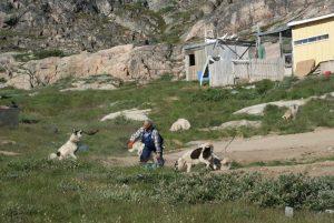 GJ-WGR-4-Amazing-days-Ilulissat-4-days - GJ-WGR-4-Feeding-the-dogs-2.jpg