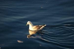GJ-WGR-4-Amazing-days-Ilulissat-4-days - GJ-WGR-4-Midnight-sailing-at-the-Icefjord-22.jpg